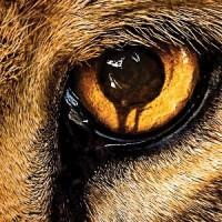 'Zoo', la serie de CBS se verá en una cadena de Mediaset