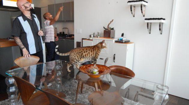 'El encantador de gatos' enseñará a mejorar la convivencia con los felinos en DKISS