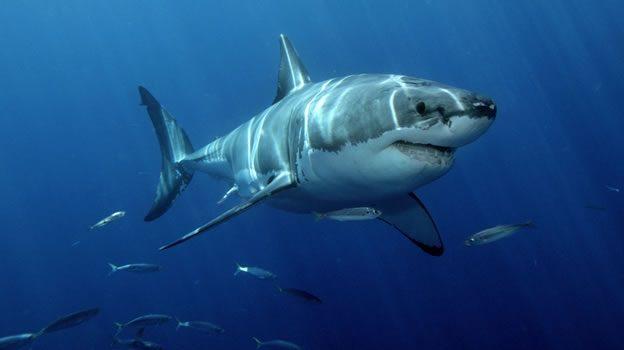 'Sharkfest', estreno en National Goegraphic