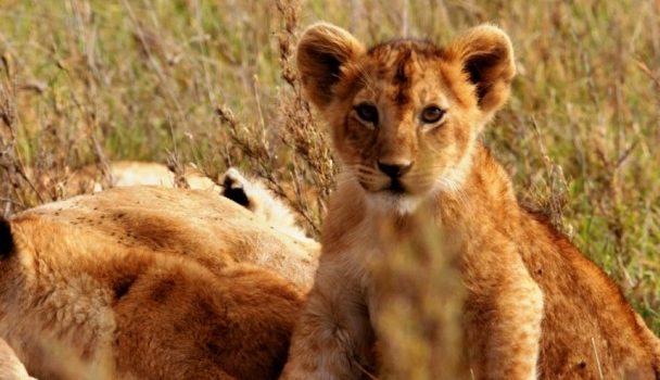 'Creciendo en 'África', la nueva producción de Nat Geo Wild llega esta tarde a la parrilla