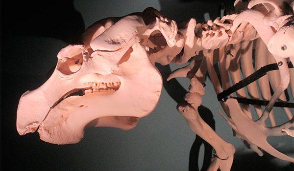 Don Wildman descubre en DMax 'Misterios en el museo'