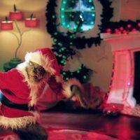 AMC pone en marcha la programación navideña más variada en sus 14 canales temáticos